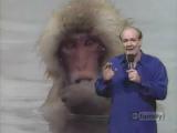 Reportaż na żywo - Małpy